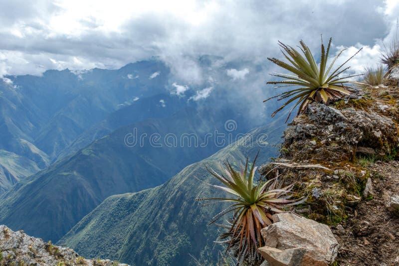 Wąska ścieżka na wycieczkuje śladzie przy dużych wysokości Peruwiańskimi górami między Maizal i Yanama, Peru obraz royalty free