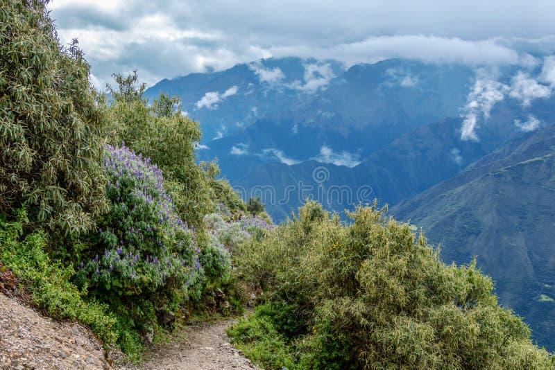 Wąska ścieżka na wycieczkuje śladzie przy dużych wysokości Peruwiańskimi górami między Maizal i Yanama, Peru obrazy stock