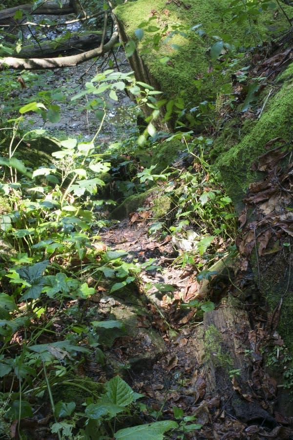Wąska ścieżka przez skał obrazy stock