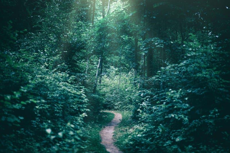 Wąska ścieżka w ciemnym lesie iluminującym sunrays fotografia stock