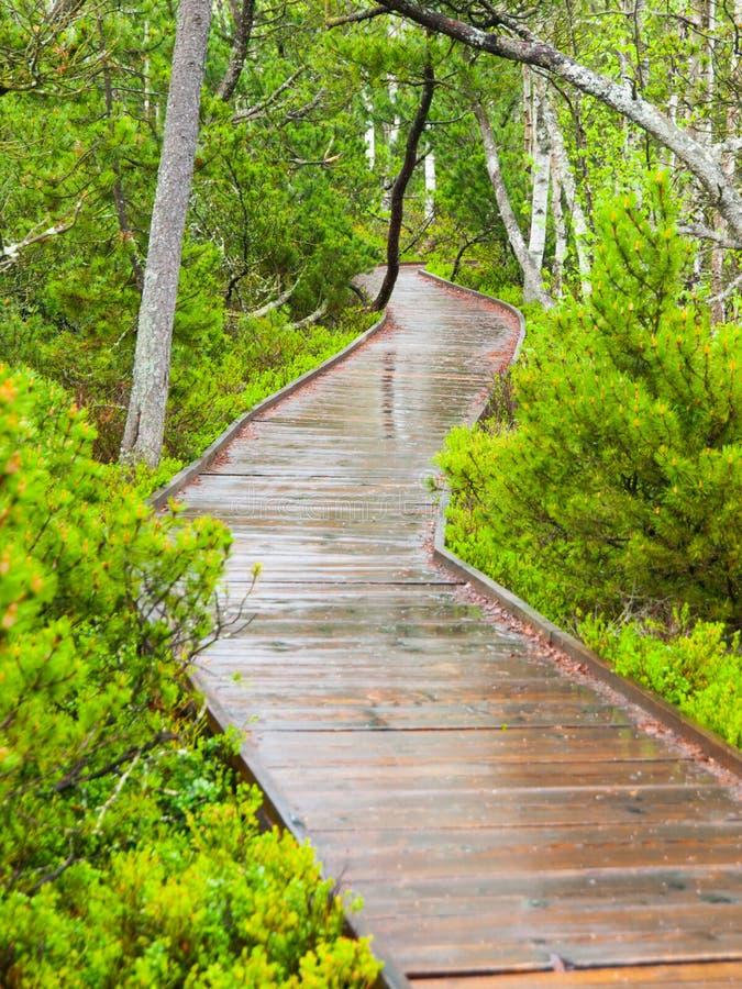 Wąska drewniana ścieżka w lesie zdjęcie stock