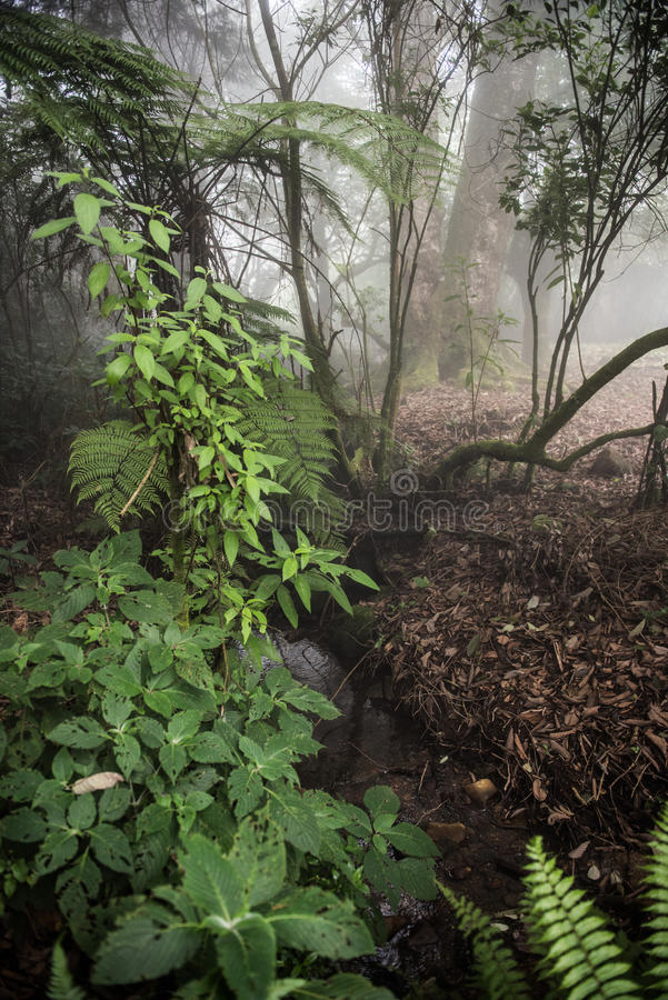 Wąska rzeka Przez lasu obraz stock