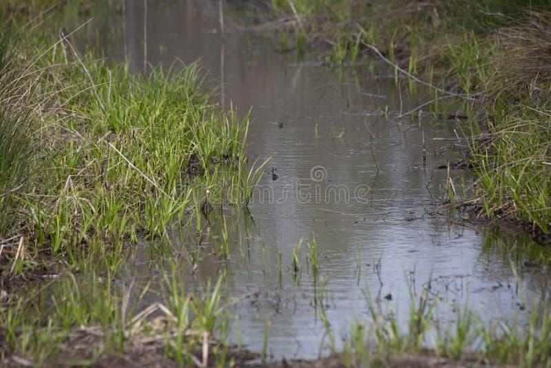Wąska woda Lenieje zdjęcia royalty free