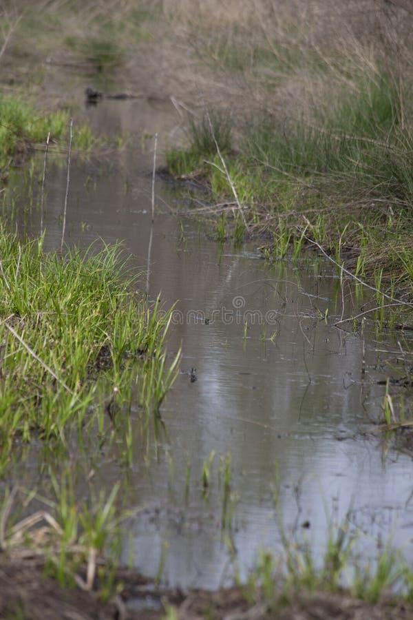 Wąska woda Lenieje zdjęcie stock