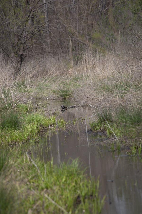 Wąska woda Lenieje fotografia stock