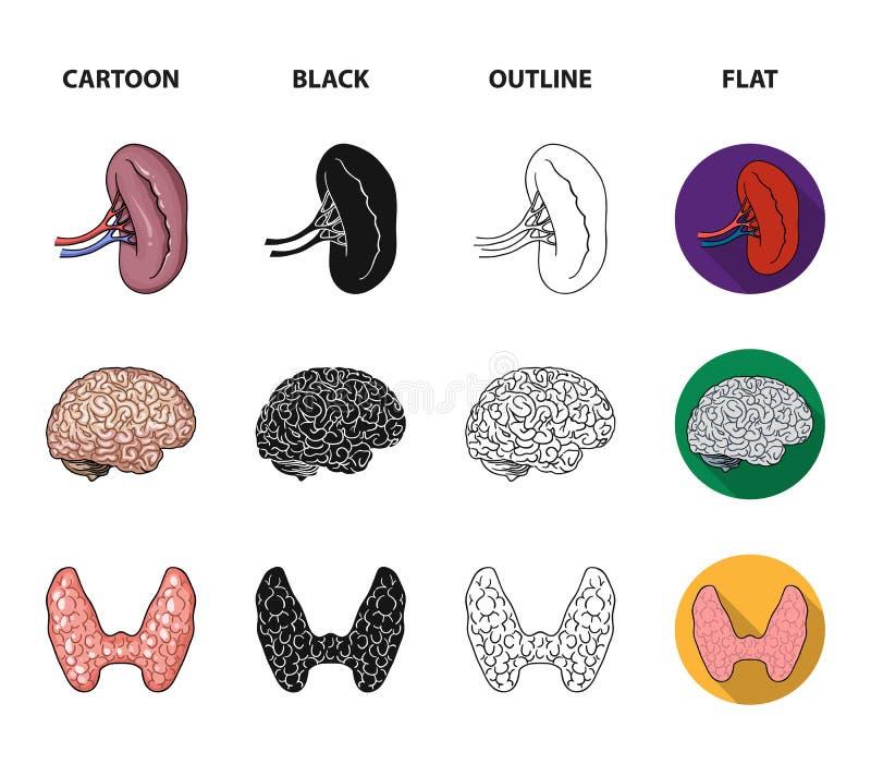 Wątróbka, gallbladder, cynaderki, mózg Ludzkich organów ustawiać inkasowe ikony w kreskówce, czerń, kontur, mieszkanie stylowy we royalty ilustracja
