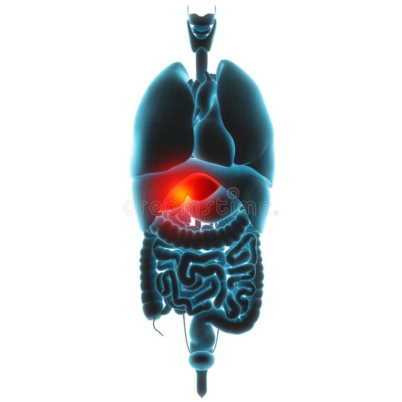 Wątrobowy organu ból royalty ilustracja