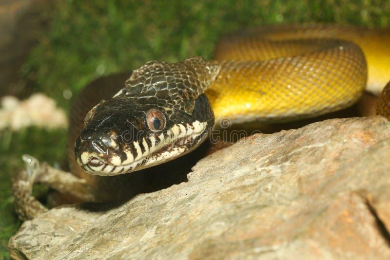 węża biała w ogrodzie obraz royalty free