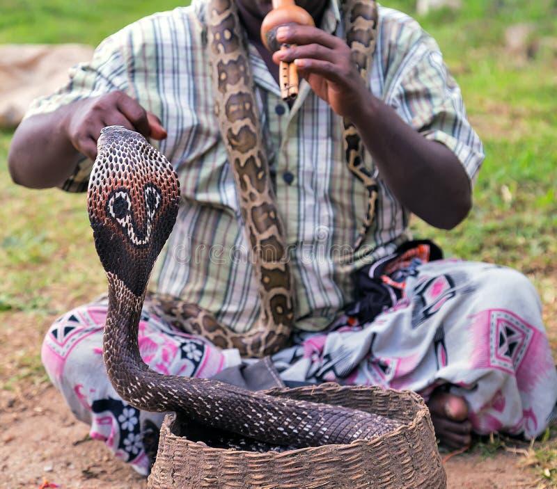Węża fakir bawić się królewiątko kobry obrazy royalty free