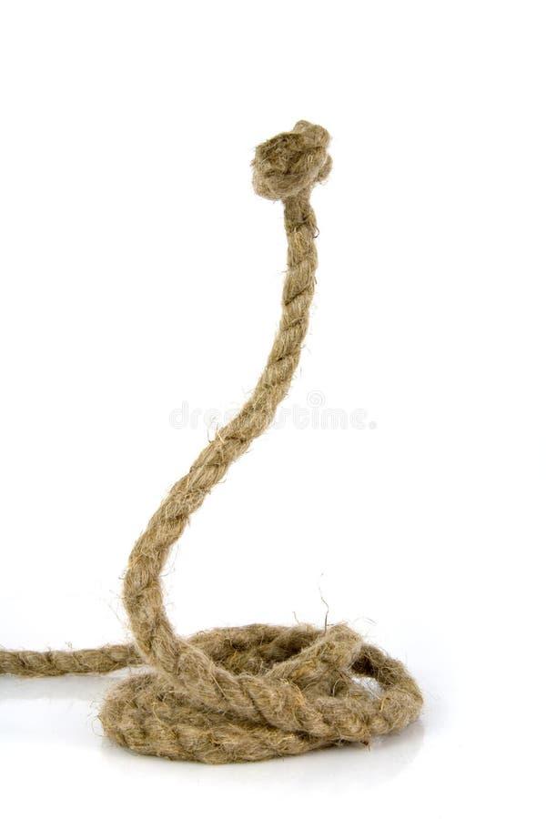 węża linowy biel obrazy stock