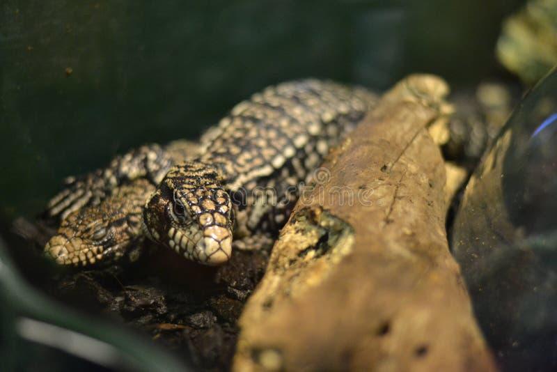 Węża naturalny park zdjęcia stock