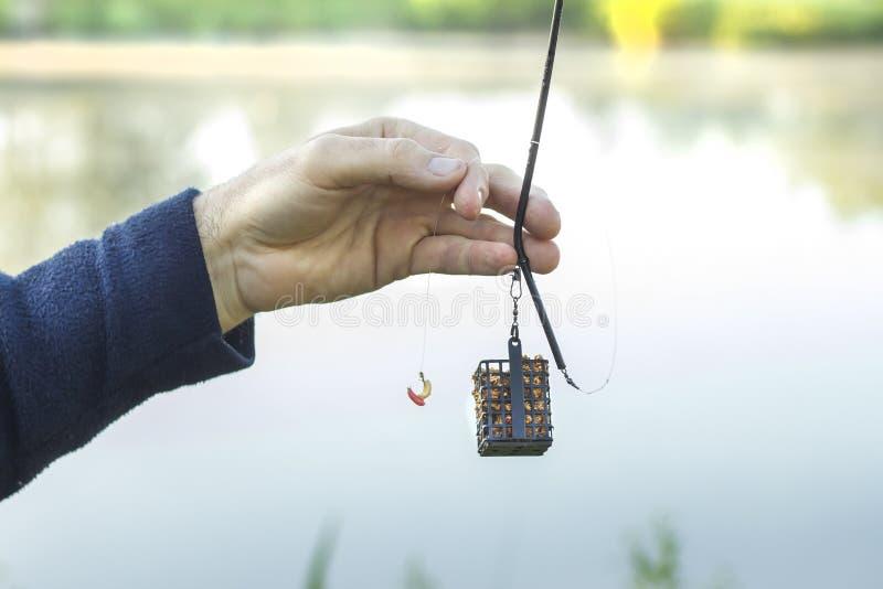 Wędkarza ` s ręka trzyma groundbait pudełko z popasem i lidera z haczykiem z larwami komarnica obrazy royalty free