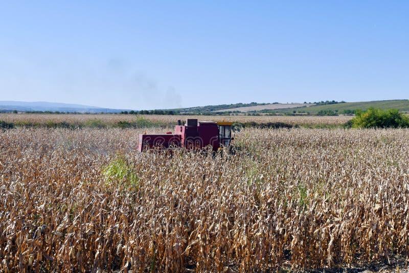 Węgry, Rolnictwo, Zbiór zdjęcie stock