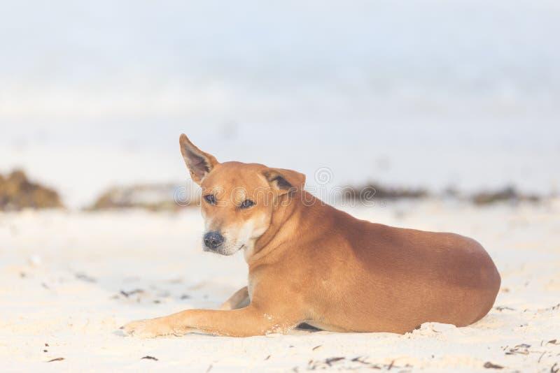 Włóczęgi pies na plaży obraz royalty free