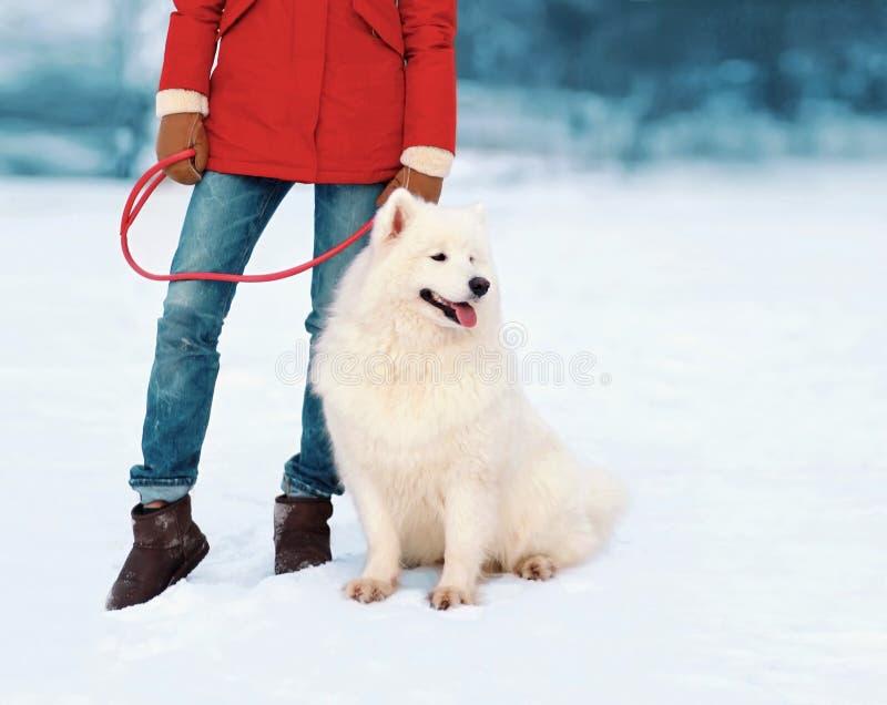 Właściciel trzyma Białego Samoyed psa na smyczu w zimie zdjęcie royalty free