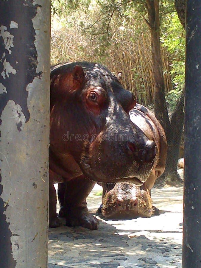 Właśnie dzień w zoo zdjęcie royalty free