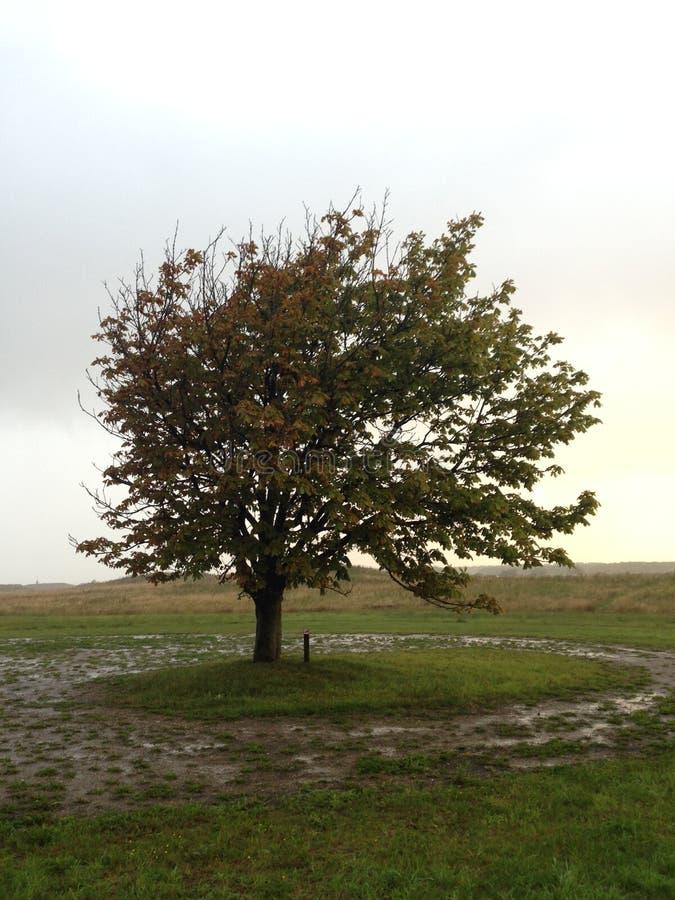 Właśnie Możny drzewo obraz royalty free
