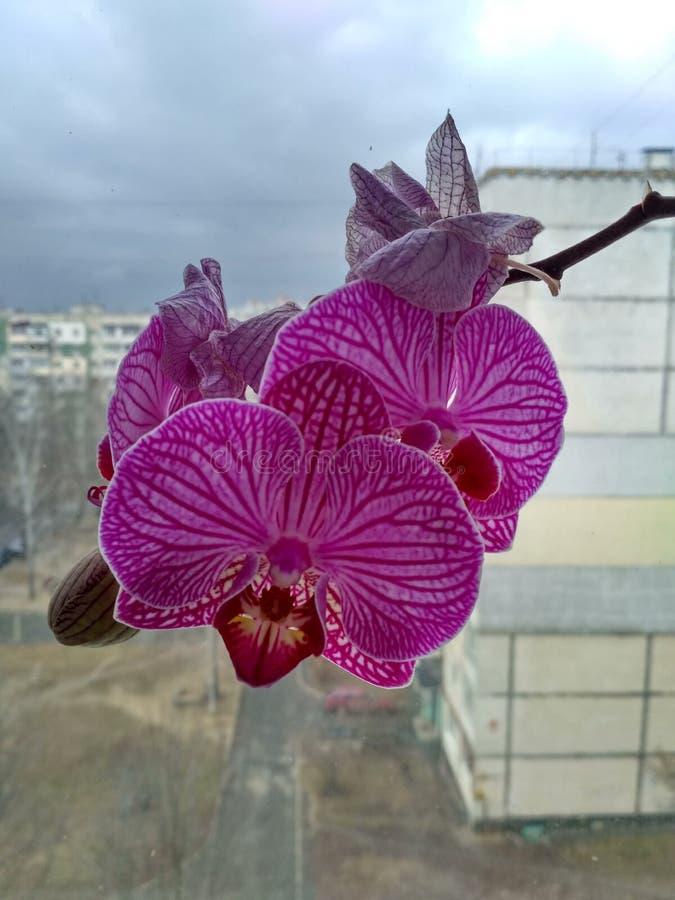 Właśnie orchidea zdjęcia royalty free