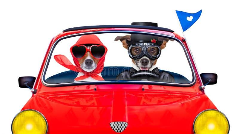 Właśnie zamężni psy fotografia royalty free