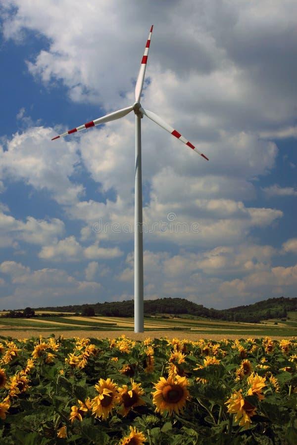 władze roślin wiatr obrazy stock