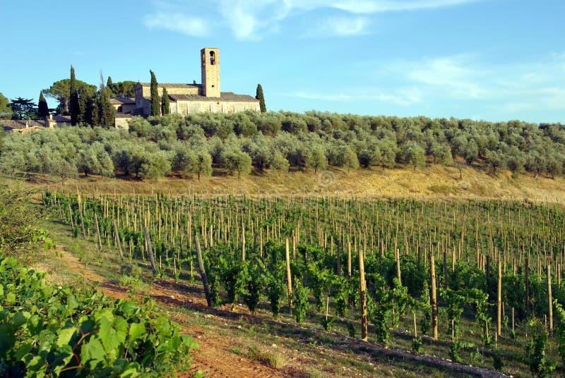 włochy winnica Toskanii obrazy royalty free