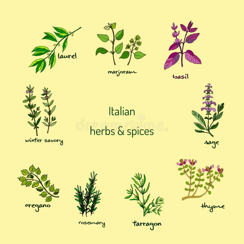 Włoscy ziele i pikantność ilustracji