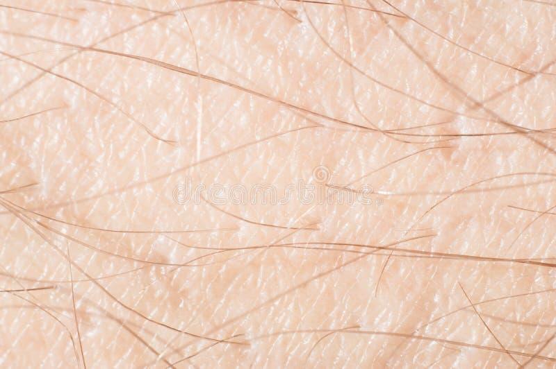 Włosy z skórą na ludzkiej ręce w górę, makro- strzał fotografia royalty free