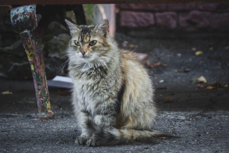 Wściekły kot siedzący na asfalcie na ulicy patrząc na kamerę fotografia stock