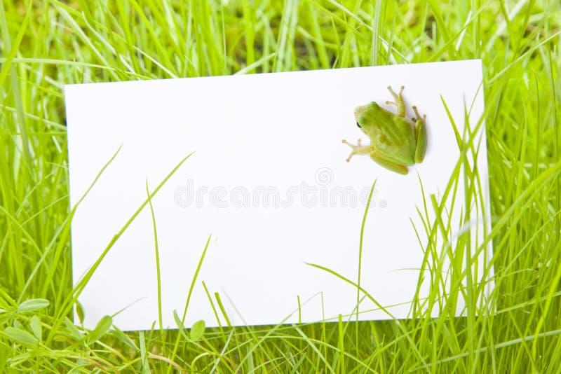 wśród żaby trawy znaka drzewnego biel zdjęcia stock