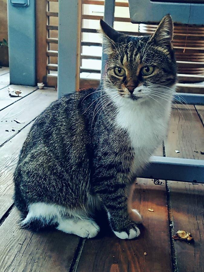 wśród kotów, zbyt są smakosze, tam zdjęcie royalty free