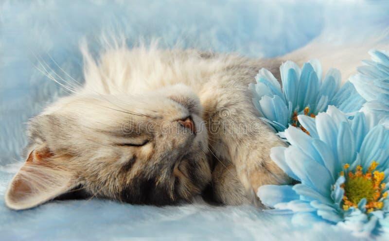 wśród kota kwitnie dosypianie zdjęcia royalty free