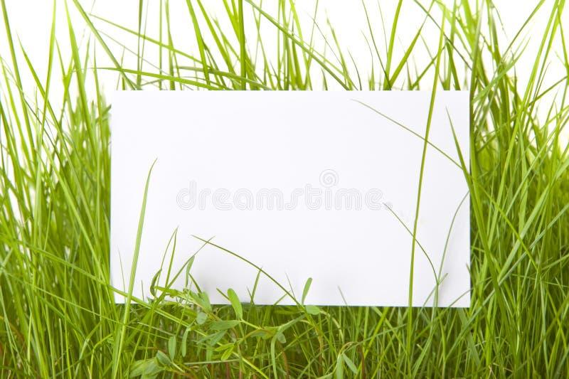 wśród trawy znaka biel zdjęcie royalty free
