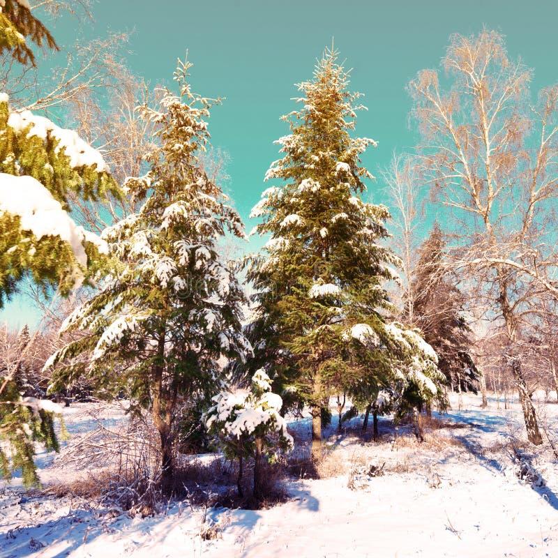 W śniegu zima park zdjęcie royalty free