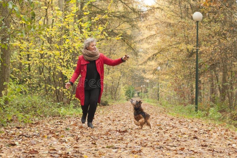 W średnim wieku dama bawić się z jej psem zdjęcie stock