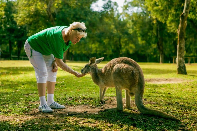 W średnim wieku kobieta karmi kangura przy zoo zdjęcia royalty free