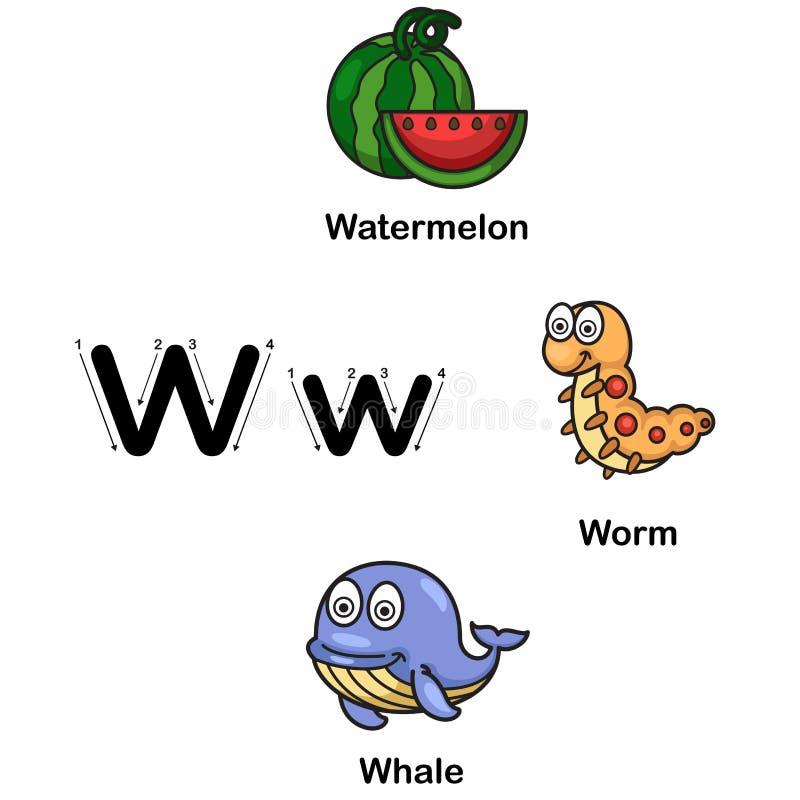 W-anguria della lettera di alfabeto, verme, illustrazione di vettore della balena illustrazione di stock