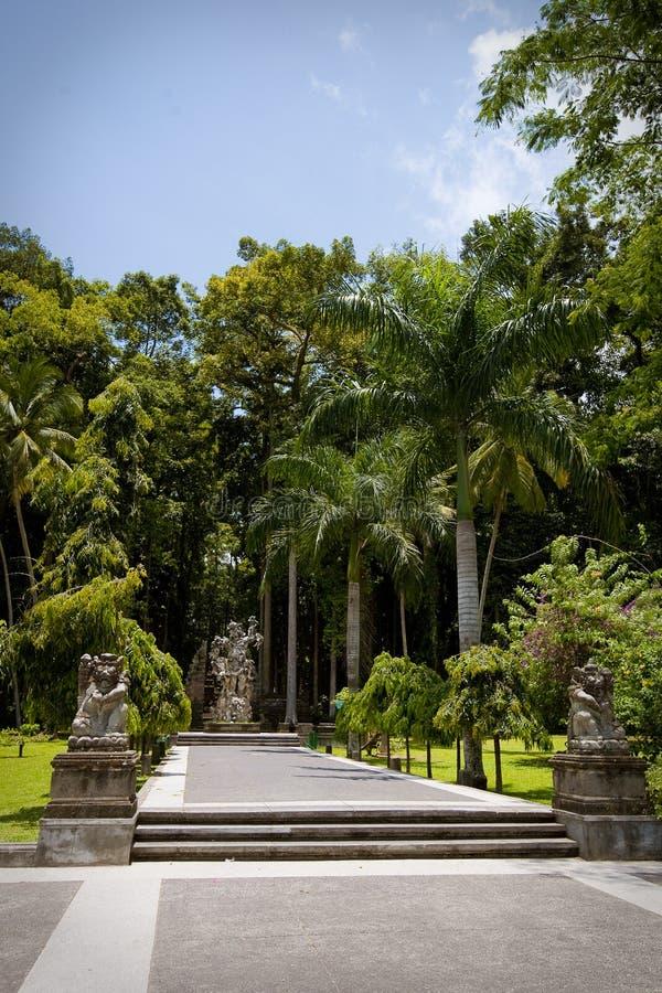 W Bali małpi las zdjęcia royalty free