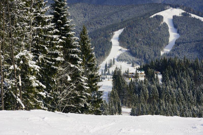 W Carpathians na Bukovelya zdjęcia royalty free