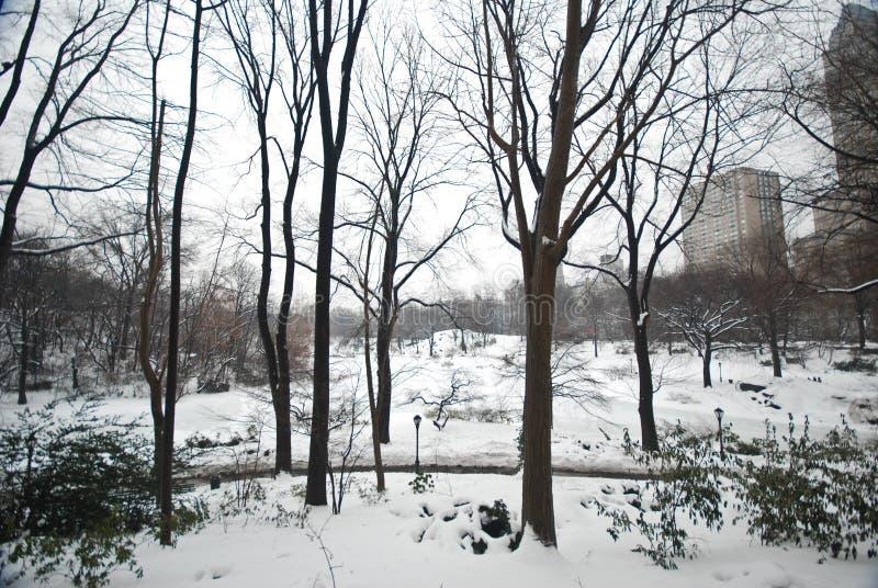 W Centrala Parku zima Śnieg, Manhattan obraz royalty free