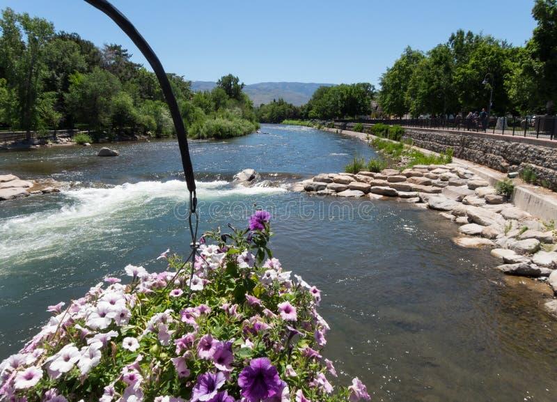 w centrum Nevada Reno rzeki truckee obraz stock