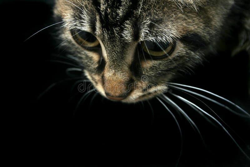 w dół na kota obraz royalty free