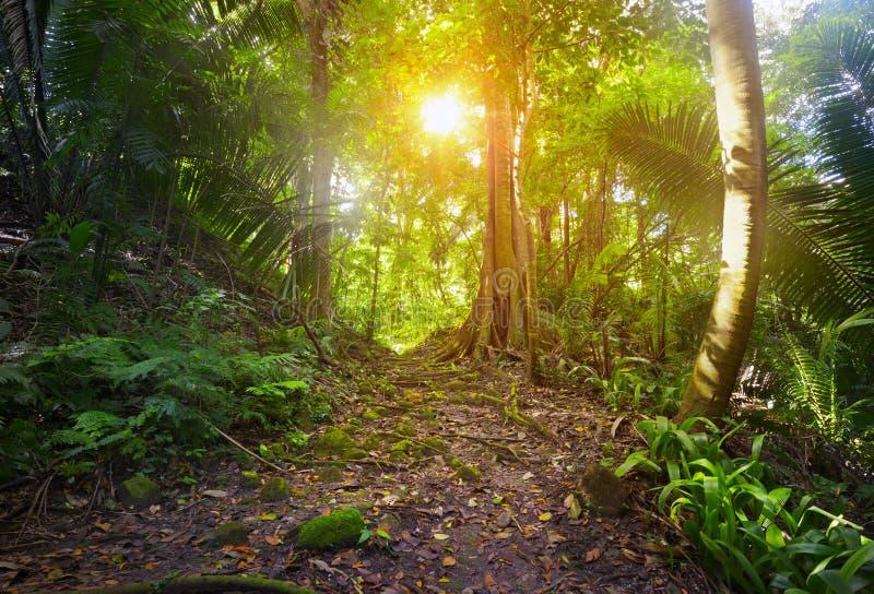 W dżungli archeologiczny parkowy Cebal, Gwatemala zdjęcie royalty free