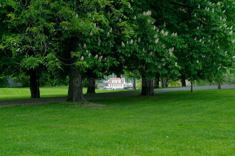 w domu drzewa fotografia stock