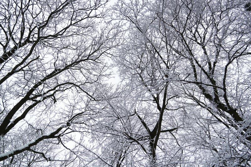 w drzewo obraz stock