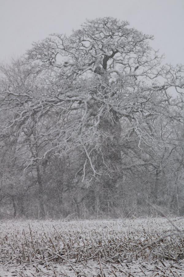 w drzewo zdjęcia royalty free