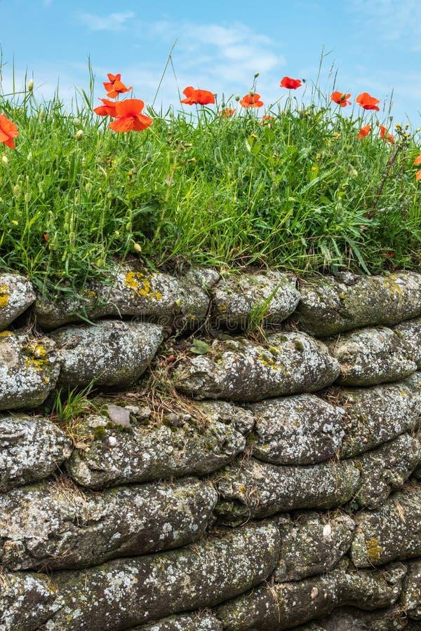 W Flandryjskich polach maczka cios, Diksmuide, Flandryjski, Belgia zdjęcia stock