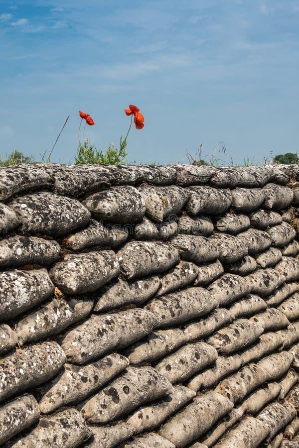 W Flandryjskich polach maczka cios, Diksmuide, Flandryjski, Belgia zdjęcie royalty free