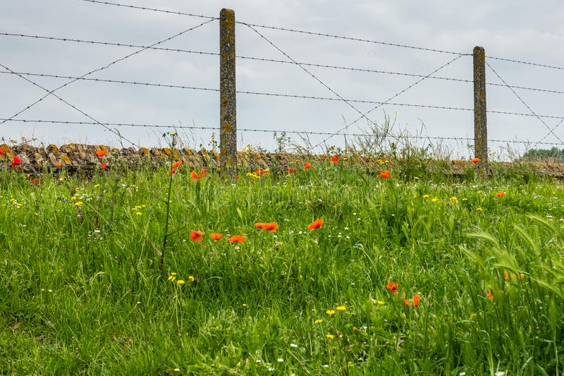W Flandryjskich polach maczka cios, Diksmuide, Flandryjski, Belgia obraz stock