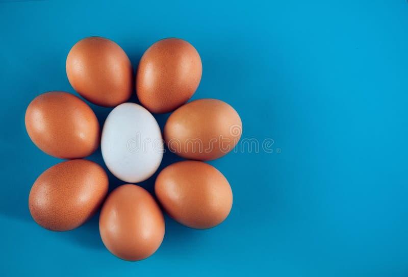 W formie okręgu lub kwiatów kłamstw na błękitnym tle grup ośmiu jajka, odgórny widok kosmos kopii obraz royalty free
