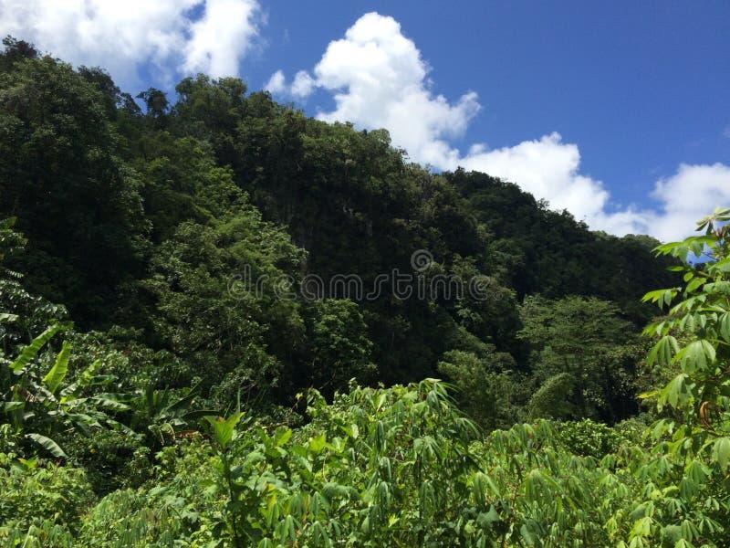 W Forrest zdjęcie stock